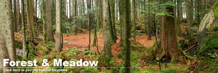 header_forest_meadows.jpg