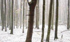 forest_meadows_006.jpg