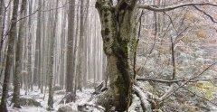 forest_meadows_007.jpg