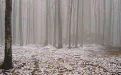 forest_meadows_008.jpg