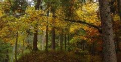 forest_meadows_010.jpg