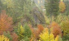 forest_meadows_011.jpg