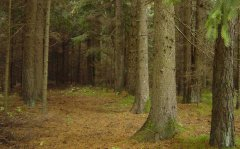 forest_meadows_012.jpg