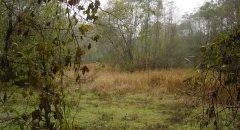 forest_meadows_013.jpg