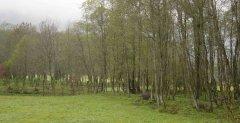 forest_meadows_014.jpg