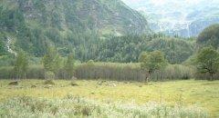 forest_meadows_017.jpg