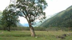 forest_meadows_019.jpg