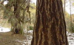 forest_meadows_021.jpg