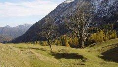 forest_meadows_023.jpg