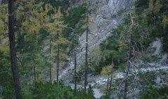 forest_meadows_025.jpg