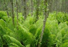forest_meadows_026.jpg