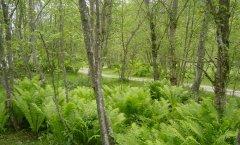 forest_meadows_027.jpg