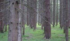 forest_meadows_028.jpg