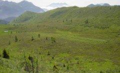 forest_meadows_029.jpg