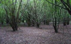 forest_meadows_030.jpg