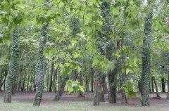 forest_meadows_031.jpg