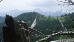 forest_meadows_032.jpg