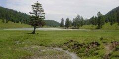 forest_meadows_033.jpg