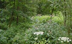 forest_meadows_035.jpg