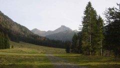 forest_meadows_036.jpg