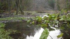 forest_meadows_037.jpg