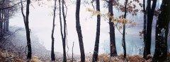 forest_meadows_038.jpg