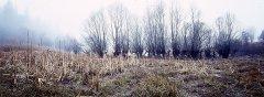 forest_meadows_041.jpg