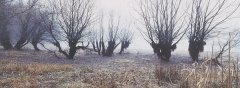 forest_meadows_042.jpg