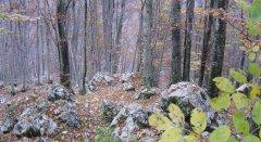 forest_meadows_045.jpg