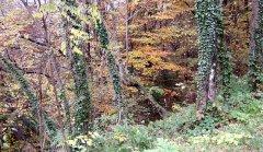 forest_meadows_046.jpg