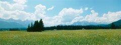 forest_meadows_047.jpg