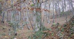 forest_meadows_048.jpg