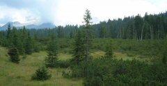forest_meadows_049.jpg
