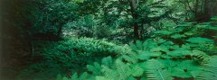 forest_meadows_050.jpg