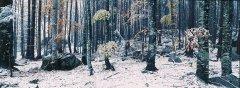 forest_meadows_051.jpg