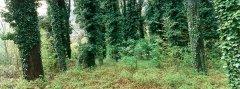 forest_meadows_052.jpg
