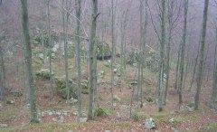 forest_meadows_053.jpg