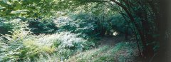 forest_meadows_054.jpg