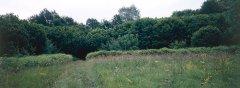 forest_meadows_055.jpg