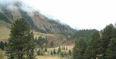 forest_meadows_056.jpg