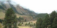forest_meadows_060.jpg