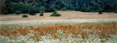 forest_meadows_061.jpg