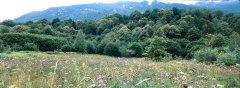 forest_meadows_062.jpg
