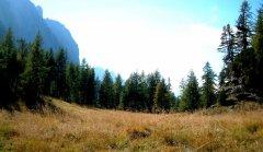 forest_meadows_063.jpg