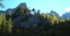 forest_meadows_065.jpg