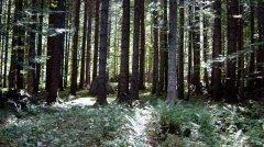 forest_meadows_066.jpg