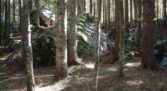 forest_meadows_068.jpg