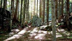 forest_meadows_069.jpg