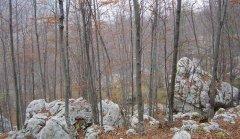 forest_meadows_070.jpg