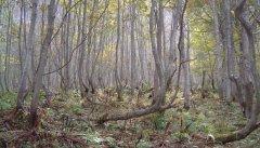 forest_meadows_072.jpg